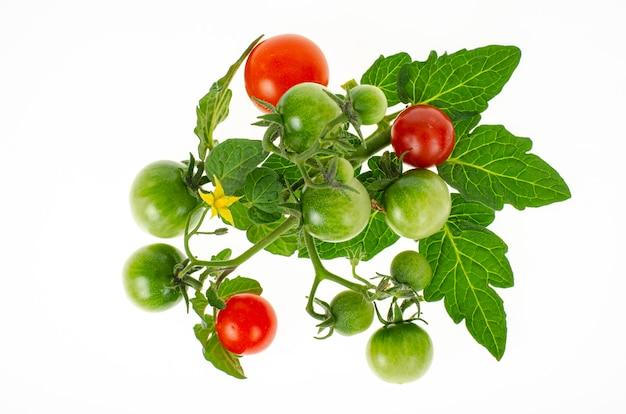 Owoce czerwonych i zielonych niedojrzałych pomidorów koktajlowych na białym tle.
