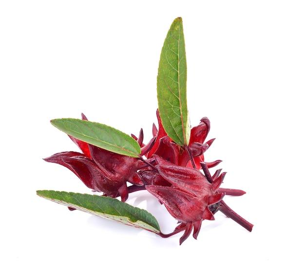 Owoce hibiskusa sabdariffa lub roselle