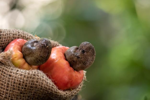 Owoce i nasiona orzechów nerkowca.