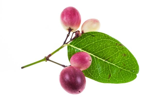 Owoce karanda lub carunda na białym on