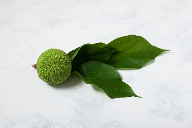 Owoce maclura pomifera z liśćmi na jasnym tle maclura lub jabłko adama stosowane w medycynie