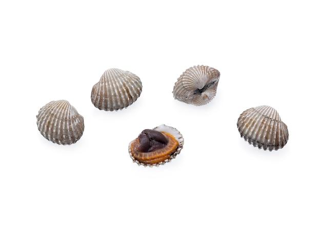 Owoce morza małże na białym tle