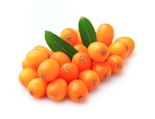 Owoce rokitnika zwyczajnego na białym tle