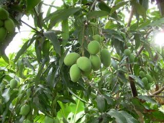 Owoców i roślin podwórko, drzewa