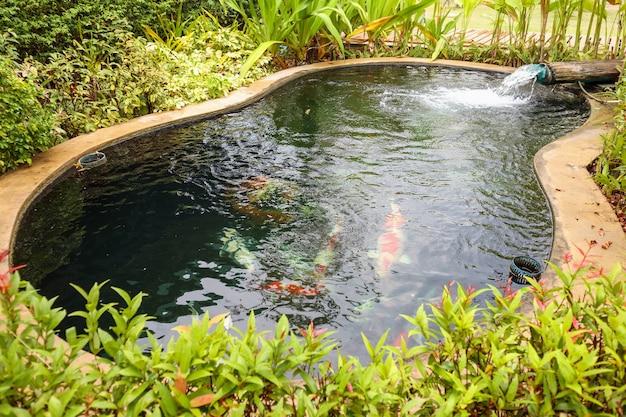 Ozdobiony staw ogrodowy z rybami