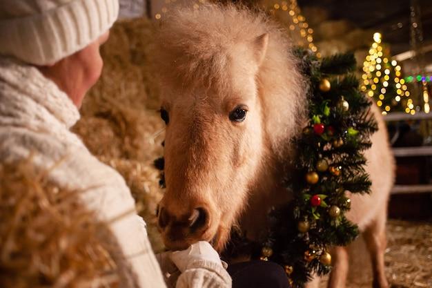 Ozdoby świąteczne na stajniach. piękny kucyk z wieńcem na szyi. choinka z balonami, strefa zdjęć na nowy rok. koń