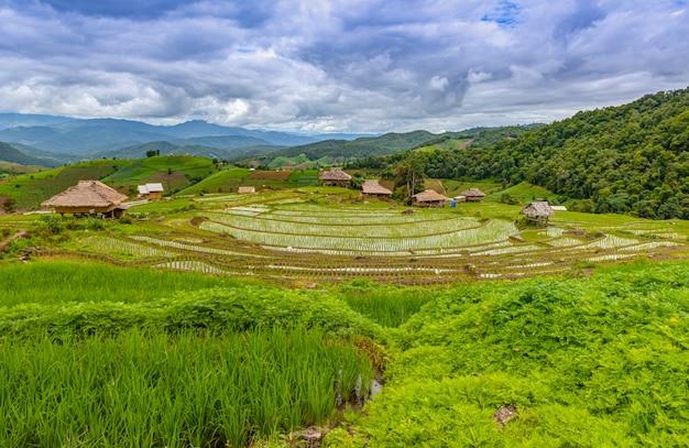 Pa bong piang rice tarasy w porze deszczowej, chaingmai, tajlandia