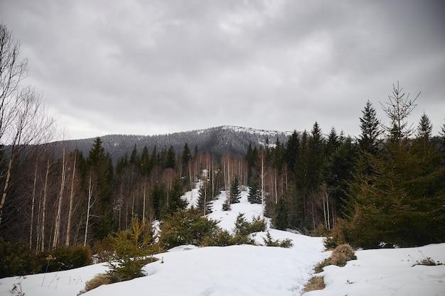 Padający śnieg i szczyty górskie pokryte płatkami śniegu wczesna wiosna w górach karpat ukraina