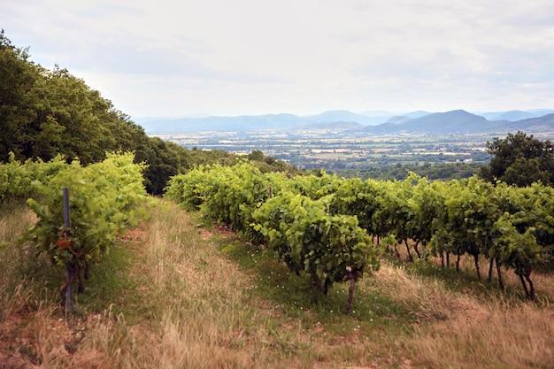Pagórkowaty śródziemnomorski krajobraz z winnicą w południowej francji