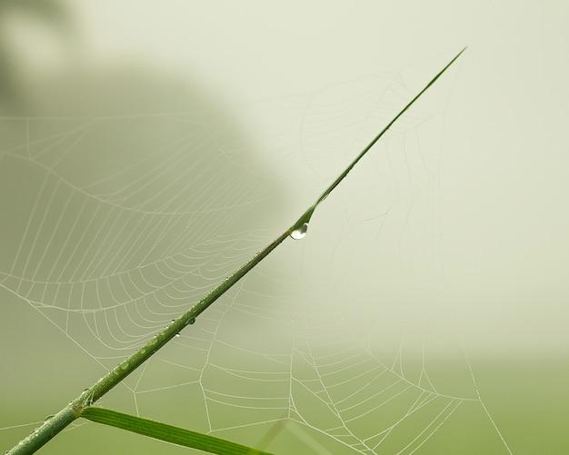 Paj? k sieci na pole ryå¼u zielony z ci ?? kich mgå,y w så,oå