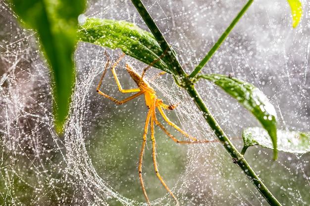 Pająk i pająk sieć na zielonym liściu w lesie