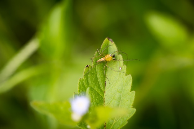Pająk na zielonym zamazanym tle