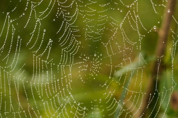 Pająk sieci pajęczyny zbliżenia tła ranku rosa