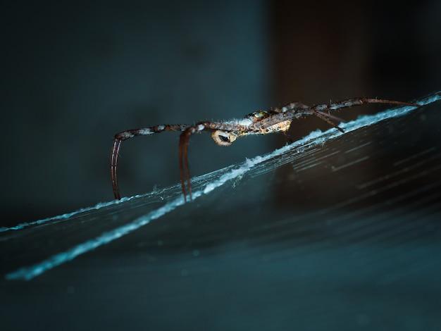 Pająk w sieci czeka na muchę.