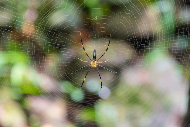 Pająk w środku swojej sieci, pająk czeka na ofiarę w sieci w parku narodowym.