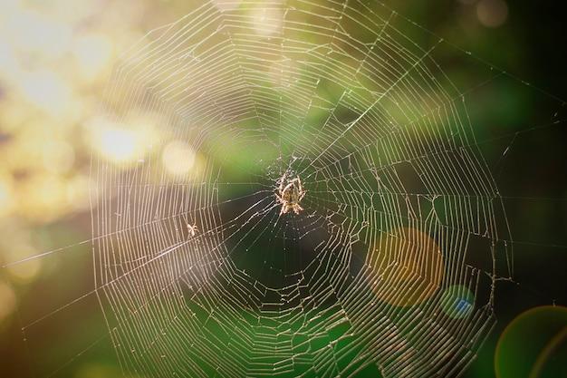 Pająk wspina się po sieci na zieleni