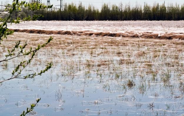 Pająki i sieci w suchej trawie w pobliżu stawu. syberia. rosja.