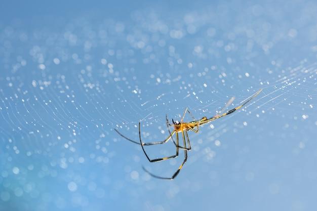 Pająki zwierząt ciemny jedwab tekstury owadów