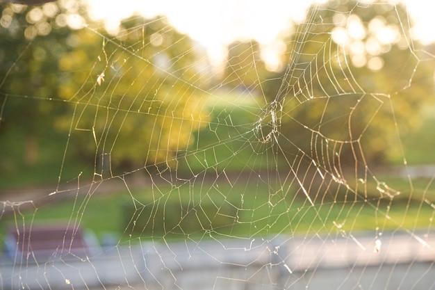 Pajęczyna lub pajęczyna z muszkami