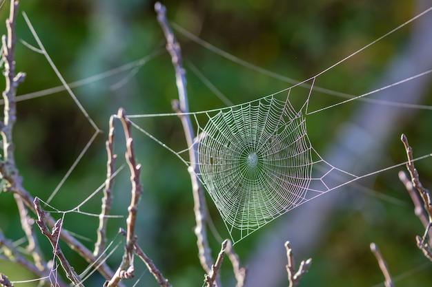 Pajęczyna w ogrodzie w jesienny poranek