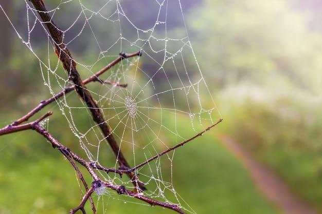 Pajęczyna z kroplami rosy na suchej gałęzi w lesie, rozmazane tło