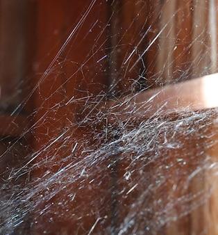 Pajęczyny lub pająka sieć na drewnianej tekstury tła ścianie w tajlandzkim drewnianym domu