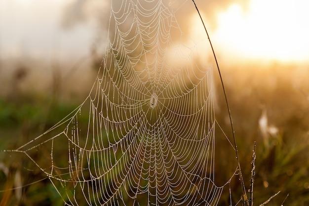 Pajęczyny na tle słońca i polnej trawy pajęczyna w tle