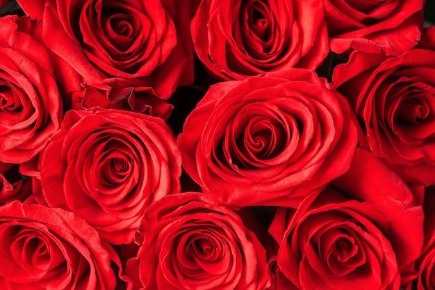 Pąki czerwonych róż z bliska. jasny świąteczny kwiatowy.