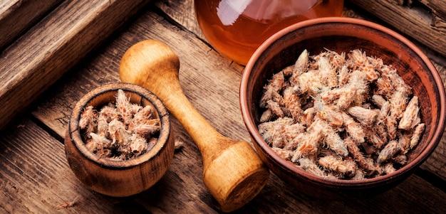 Pąki sosny, naturalny uzdrowiciel
