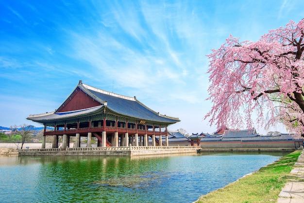Pałac gyeongbokgung z kwitnącą wiśnią wiosną, korea południowa.