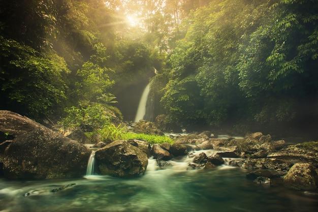 Palak siring wodospad rano z lasem piękna rano