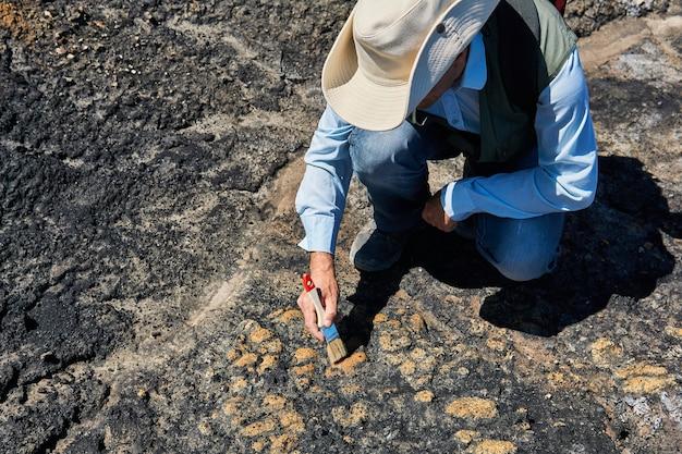 Paleontolog wydobywa niektóre skamieniałości ze skały, czyszcząc ją szczotką