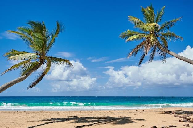 Palm beach na tropikalnej wyspie idyllic paradise - karaiby - dominikana punta cana