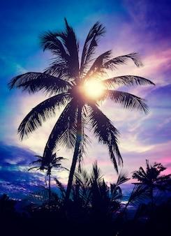 Palm na zachodzie słońca