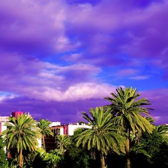 Palm tropikalny widok. wyspy kanaryjskie. koncepcja podróży