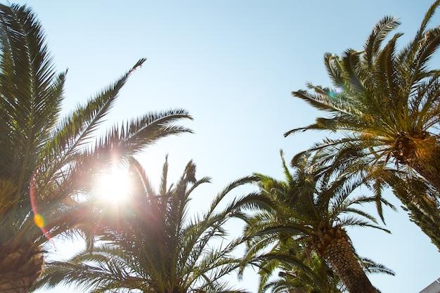 Palma daktylowa na tle jasnego nieba, pojęcie lata, makieta, tło napisu. skopiuj miejsce.