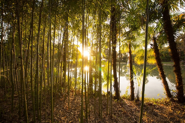 Palma i bambus ze słońcem