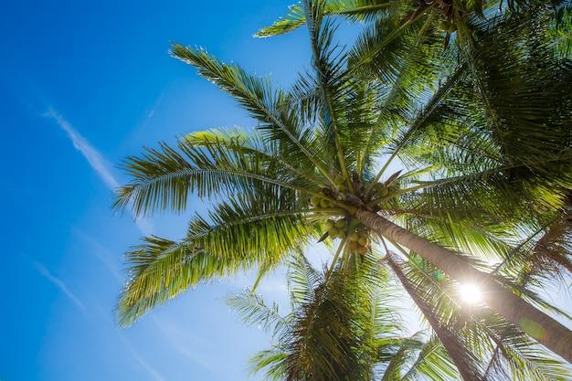 Palma kokosowa z niebieskim tłem nieba