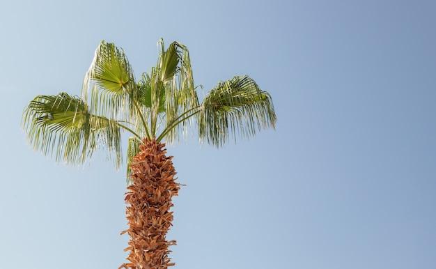 Palma na błękitnym niebie