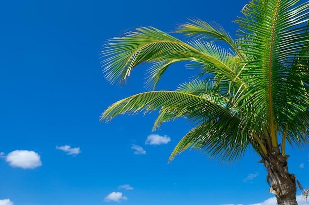 Palma na niebie