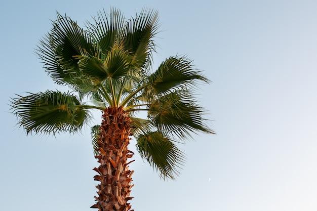 Palma na niebieskim, jasnym niebie, anioł z dołu do góry.