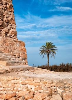 Palma na tle błękitnego nieba i starożytnych kamiennych konstrukcji.