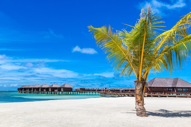 Palma na tropikalnej plaży na malediwach
