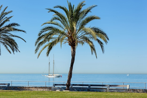 Palma nad brzegiem morza w słoneczny dzień. w tle żeglarz w całkowitym spokoju. , bezchmurne niebo nad głową.