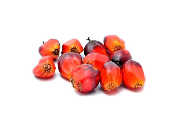 Palma olejowa na białym tle
