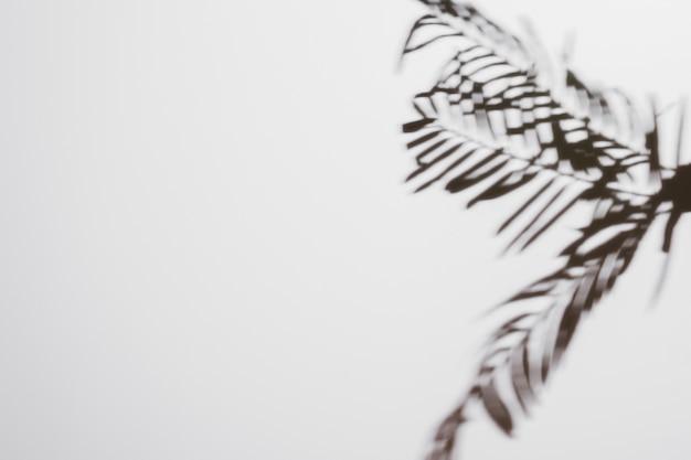 Palma pozostawia cienie na białym tle