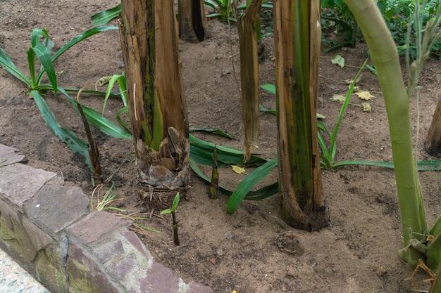 Palma w ozdobnej szklarni. tropikalna oranżeria
