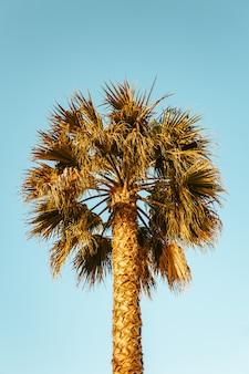 Palma w szczegółach i piękne błękitne niebo