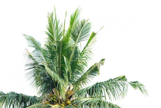 Palma z białym tle