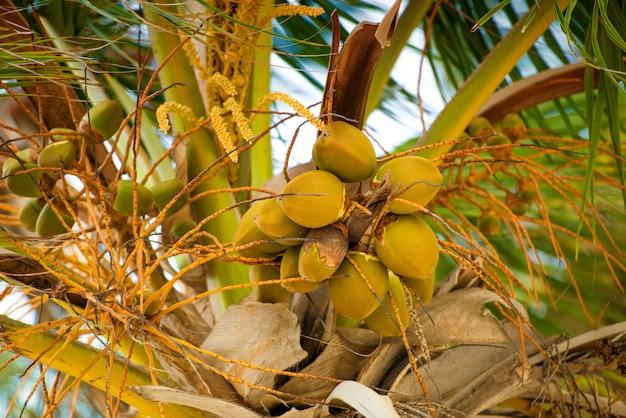 Palma z kokosy przeciw błękitne niebo